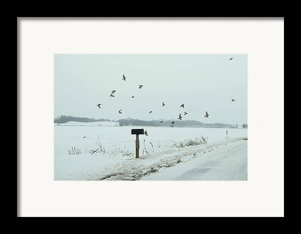 Winter Framed Print featuring the photograph Disturbing The Winter Foragers by Julie Dant