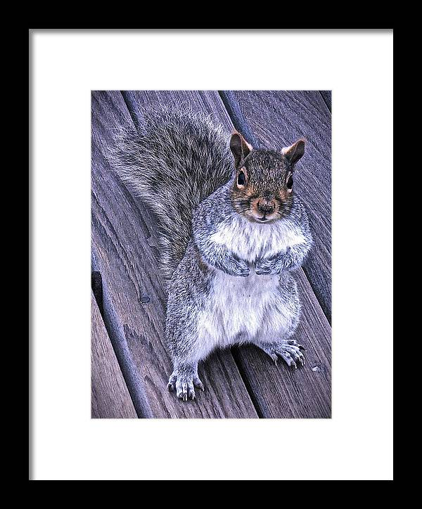 Gray Squirrel Framed Print featuring the photograph Do You Think I'm Cute by Joan Reese