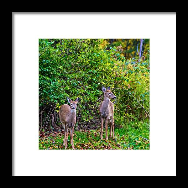 Steve Harrington Framed Print featuring the photograph Doe A Deer by Steve Harrington