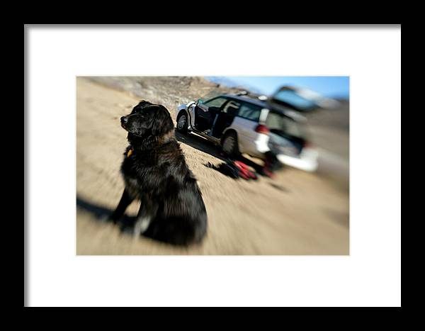 Adventure Framed Print featuring the photograph Dog In Front Of A Climbers Car by Corey Rich