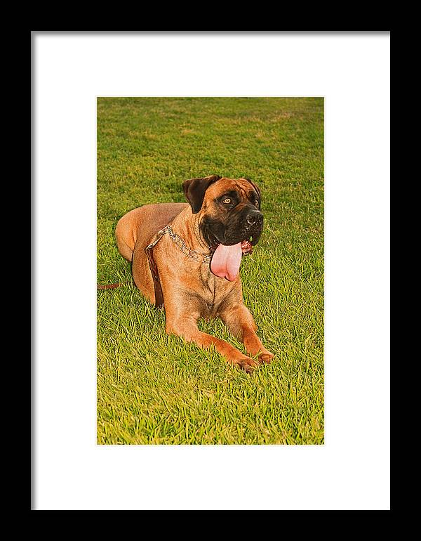Dog Framed Print featuring the photograph Dog by Ronald Olivier