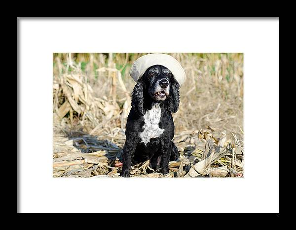 Dog Framed Print featuring the photograph Dog With A Sailor Hat by Mats Silvan