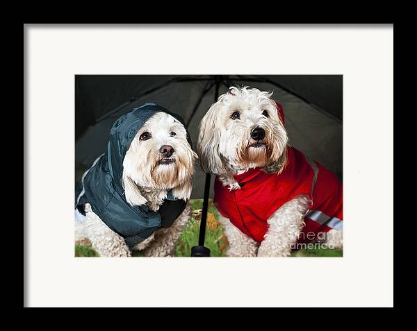 Dogs Framed Print featuring the photograph Dogs Under Umbrella by Elena Elisseeva