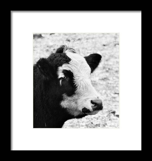 Beef Framed Print featuring the photograph Dolly by J L Zarek