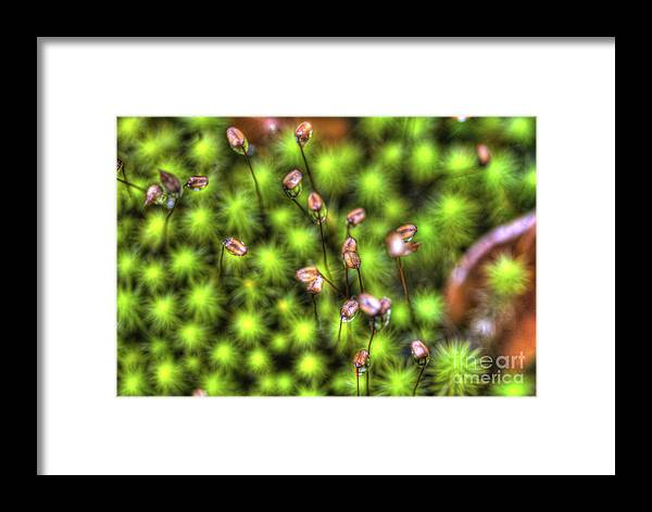 Ground Cover Framed Print featuring the photograph Dolly Sods Ground Cover by Dan Friend