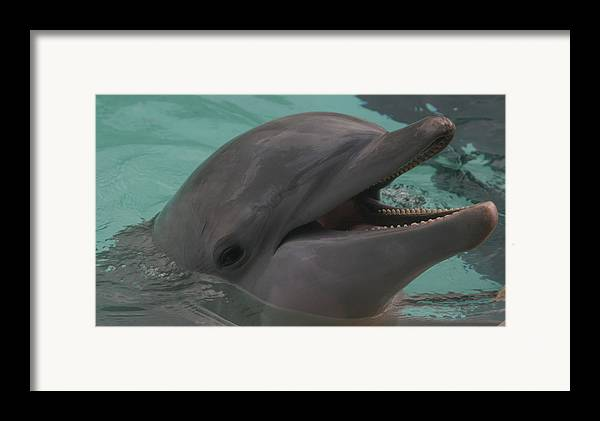 Dolphin Framed Print featuring the photograph Dolphin by Dervent Wiltshire