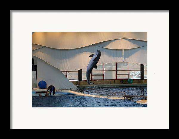 Inner Framed Print featuring the photograph Dolphin Show - National Aquarium In Baltimore Md - 121255 by DC Photographer