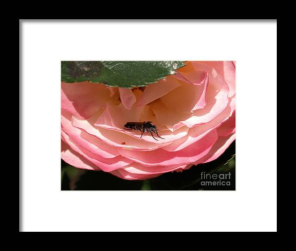 Bug Framed Print featuring the photograph Don't Bug Me by Jacklyn Duryea Fraizer