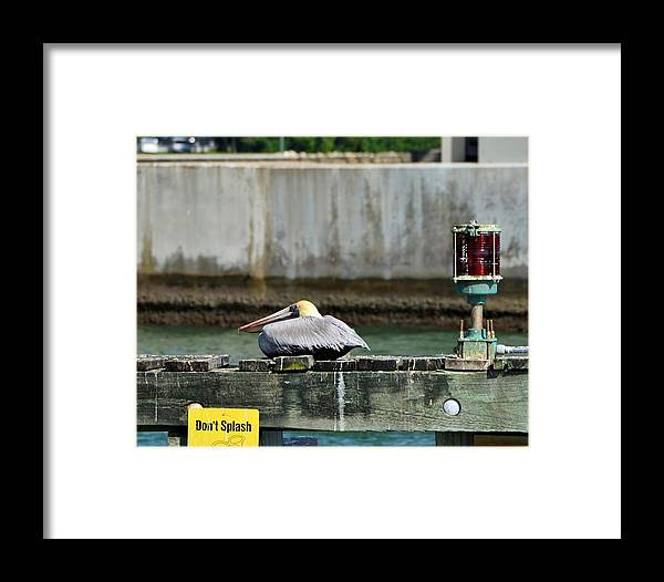 Brown Pelican Framed Print featuring the photograph Don't Splash - Miami Florida by Alex Vishnevsky