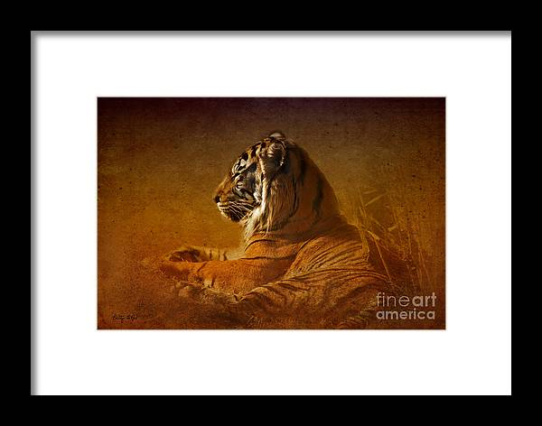 Tiger Framed Print featuring the photograph Don't Wake A Sleeping Tiger by Betty LaRue