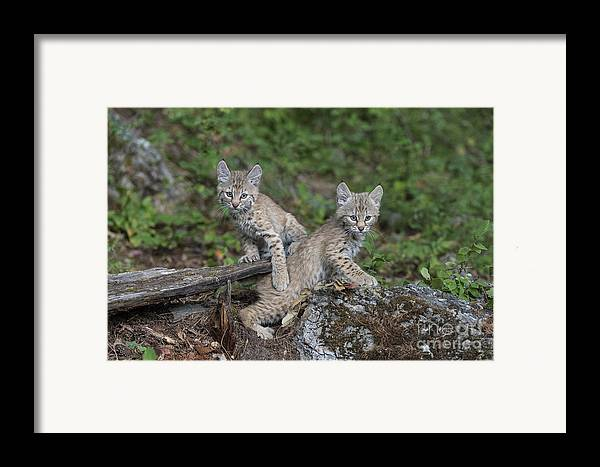 Animals Framed Print featuring the photograph Double Trouble by Sandra Bronstein