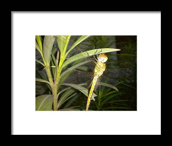 Insect Framed Print featuring the photograph Dragon Fly by Chetan Ranjan