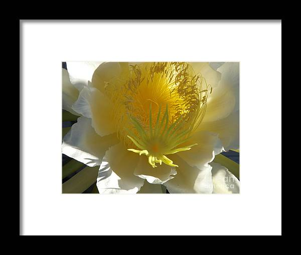 Dragon Fruit Framed Print featuring the photograph Dragon Fruit Blossom Iv by Jussta Jussta