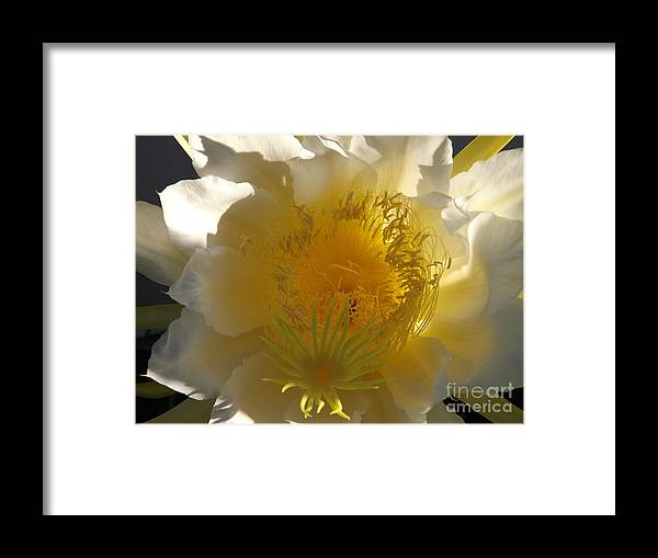 Dragon Fruit Framed Print featuring the photograph Dragon Fruit Double Center by Jussta Jussta