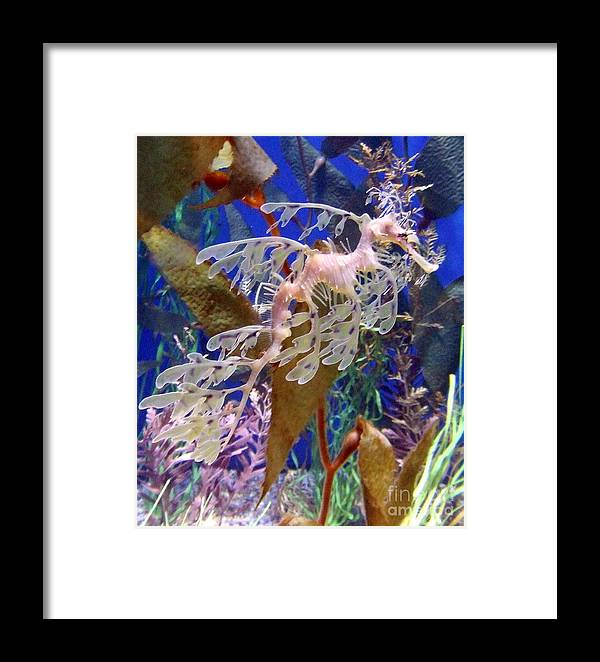 Dragon Framed Print featuring the photograph Dragon Sea Horse by Karey and David Photography