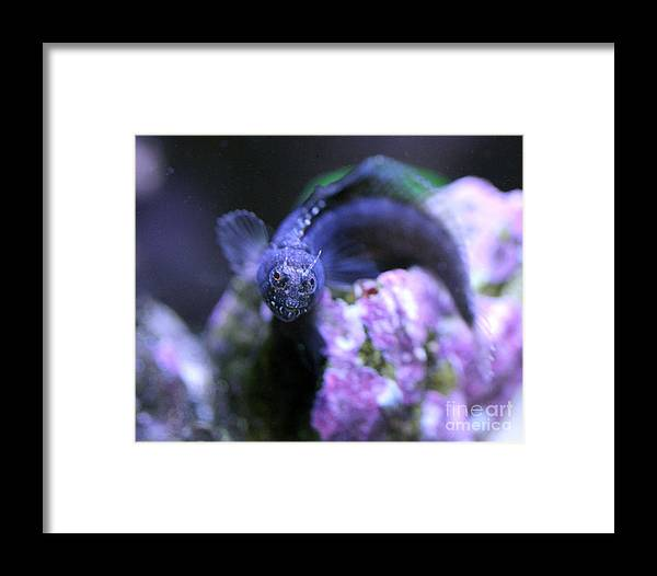 Fish Framed Print featuring the photograph Dragon by Wendy Maka - Alien Garden