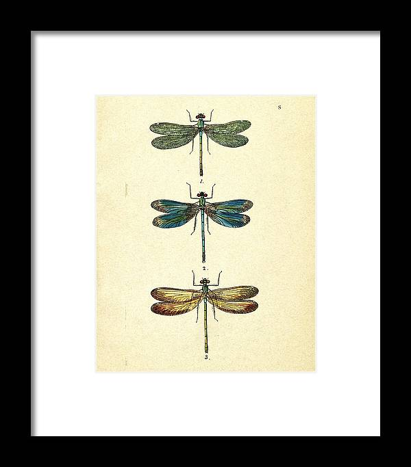 Dragonfly Framed Print featuring the photograph Dragonflies by Pati Photography