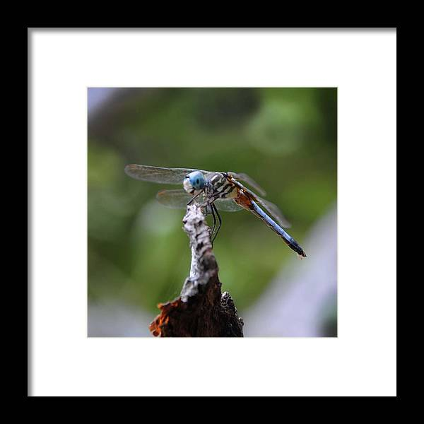 Dragonfly Framed Print featuring the photograph Dragonfly 02 by Leon Hollins III