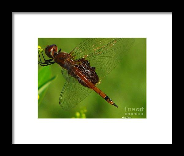 Art For The Wall...patzer Photographydragonfly Framed Print featuring the photograph Dragonfly Art 2 by Greg Patzer