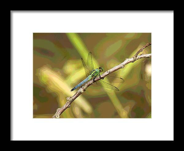 Dragonfly Framed Print featuring the photograph Dragonfly - Common Green Darner by Greg Thiemeyer