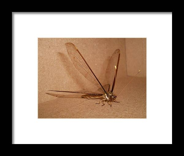 Dragonfly Framed Print featuring the photograph Dragonfly by Florentina De Carvalho