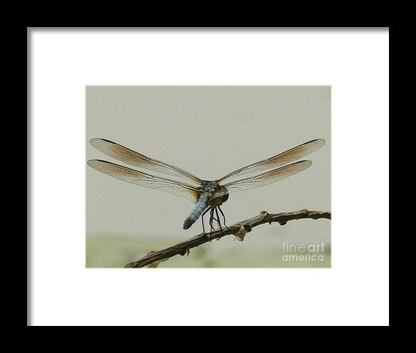 Dragonfly Framed Print featuring the photograph Dragonfly by Steven Woodard