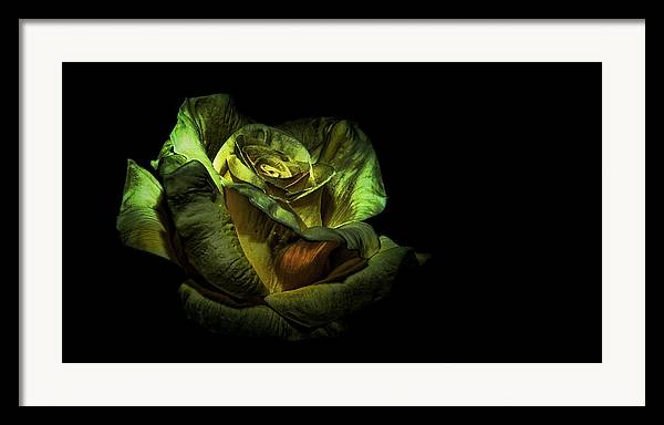 Flower Framed Print featuring the photograph Dramatic Beauty by Cecil Fuselier