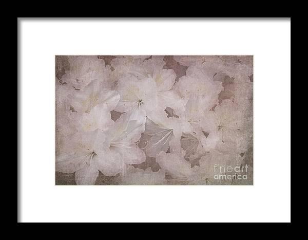 Azalea Framed Print featuring the photograph Dream Of Home by Arlene Carmel