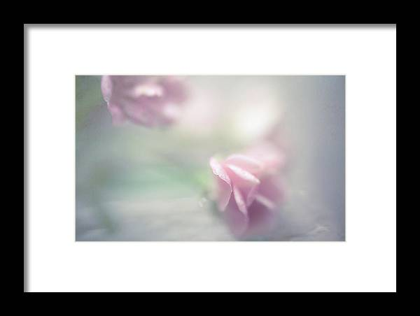 Flower Framed Print featuring the photograph Dream With Me II by Jenny Rainbow