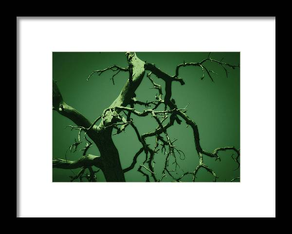 Tree Framed Print featuring the photograph Dreaming Green by Paulina Roybal