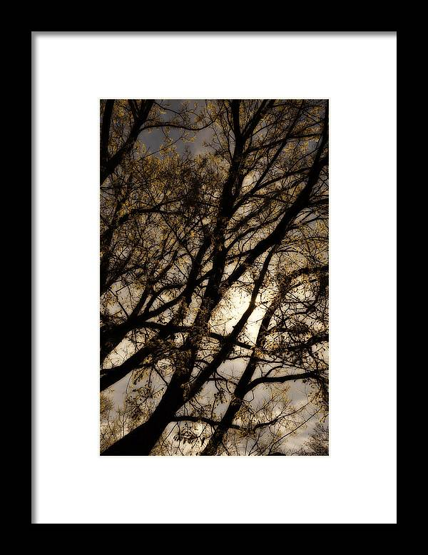 Tree Framed Print featuring the photograph Dreaming of Night by Todd Hartzo