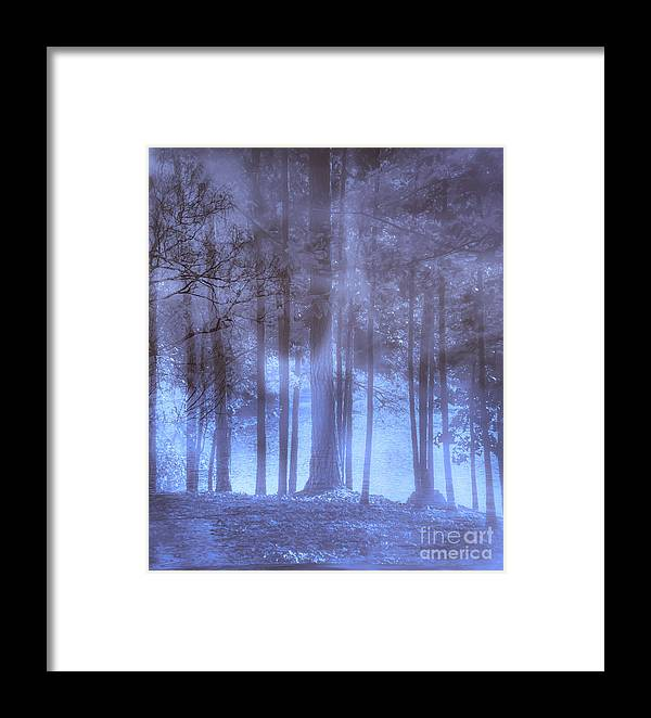 Dream Framed Print featuring the photograph Dreamy Forest by Scott Hervieux