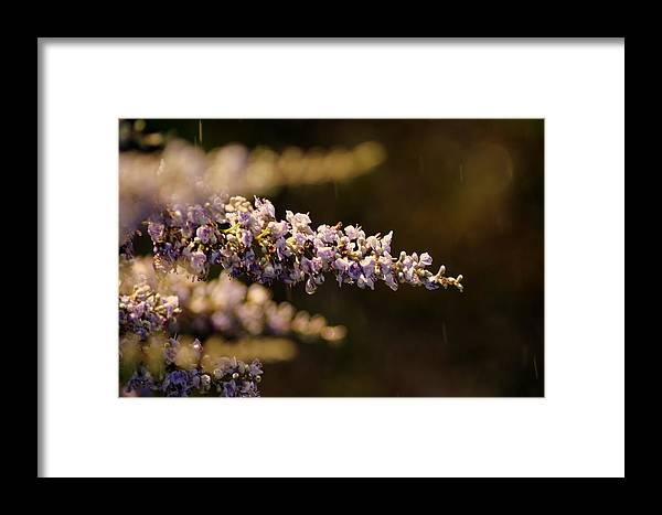 Flowers Framed Print featuring the photograph Drenched by Off The Beaten Path Photography - Andrew Alexander