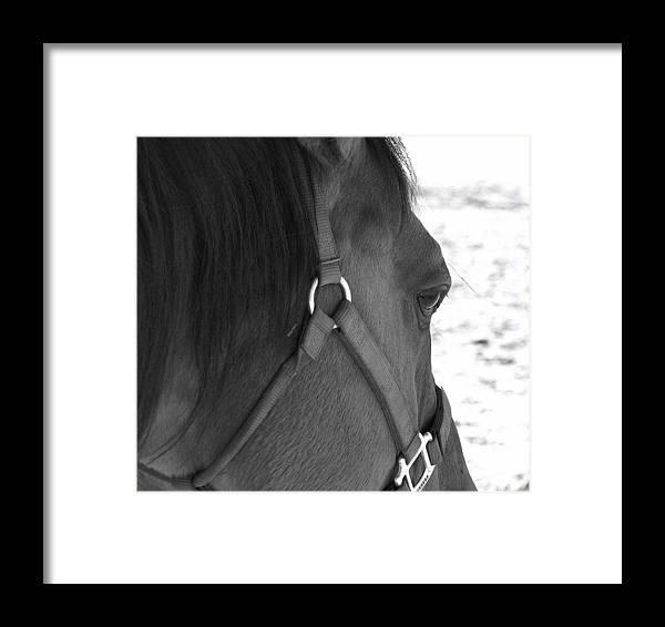 Horse Framed Print featuring the photograph Drifter by Becca Wilson