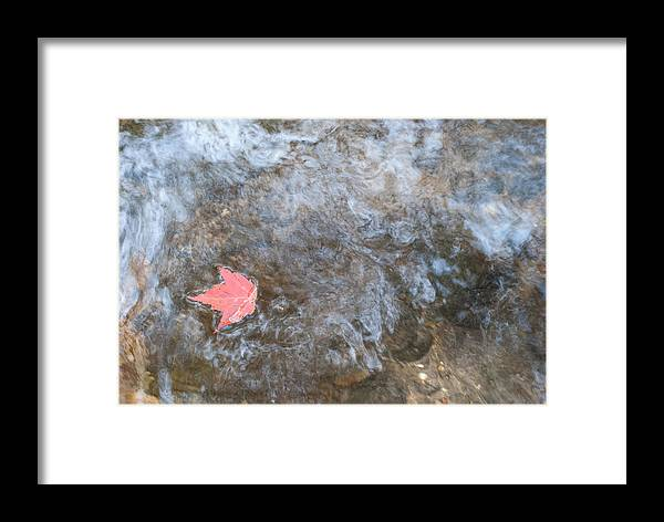 Leaf Framed Print featuring the photograph Drifting Leaf by Shelley Thomason