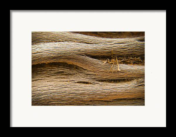 3scape Photos Framed Print featuring the photograph Driftwood 1 by Adam Romanowicz