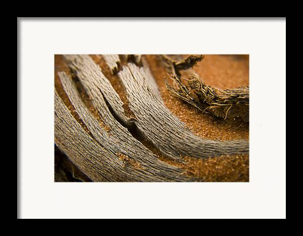 3scape Photos Framed Print featuring the photograph Driftwood 2 by Adam Romanowicz