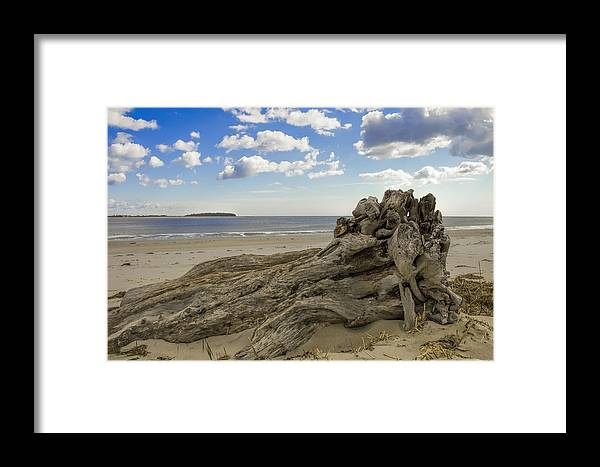 Crane Estate Framed Print featuring the photograph Driftwood  by David Stone