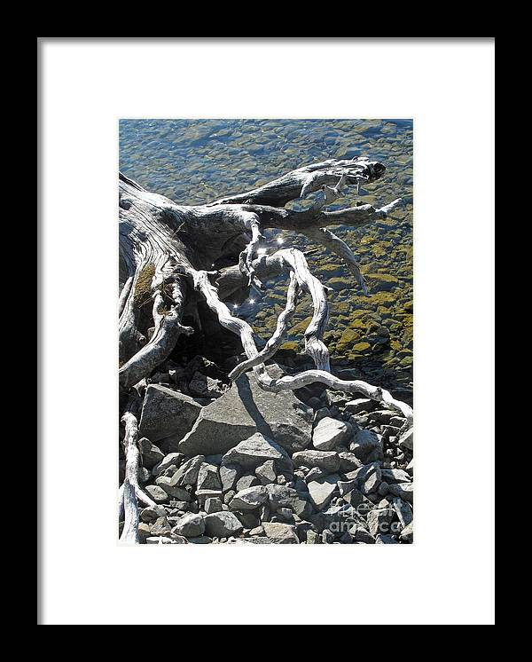 Driftwood Framed Print featuring the photograph Driftwood by Louise Peardon