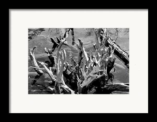 Reflection Framed Print featuring the photograph Driftwood On Lost Lake by Michelle Calkins