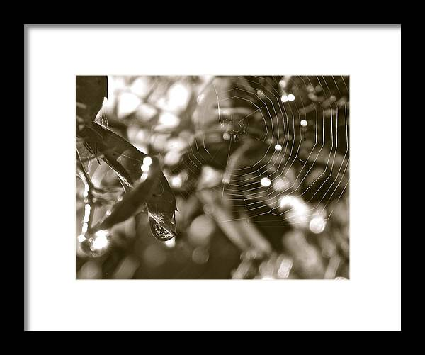 Web Framed Print featuring the painting Drip And Web by Gretchen Smith