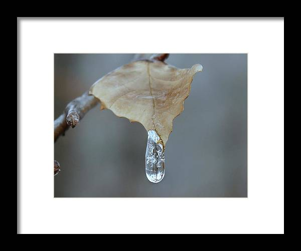 Ice Framed Print featuring the photograph Drop of Ice by Candice Trimble