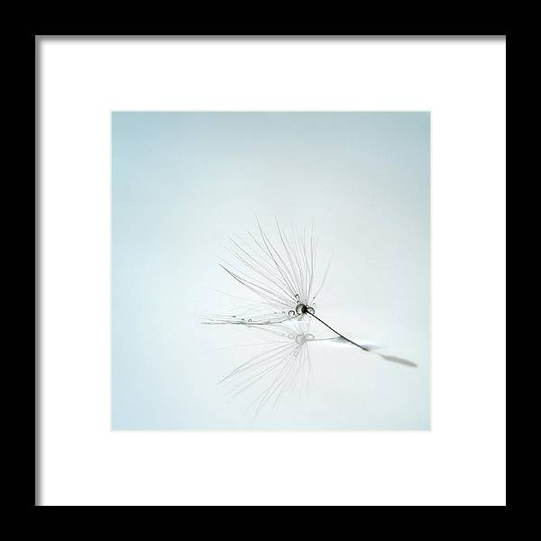 Drops Framed Print featuring the photograph Drops And Stem by Mathieu Irthum