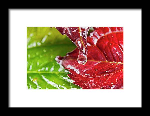North Rhine Westphalia Framed Print featuring the photograph Drops On Colorful Foliage In Autumn by Georg Hanf