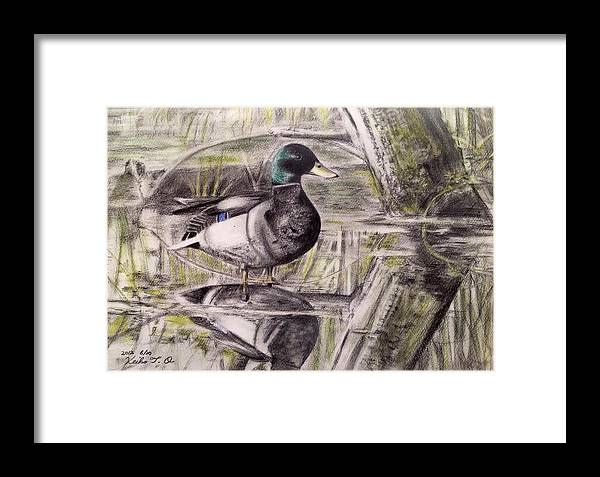 Nature Pond Framed Print featuring the drawing Duck Of Pond by Keiko Olds