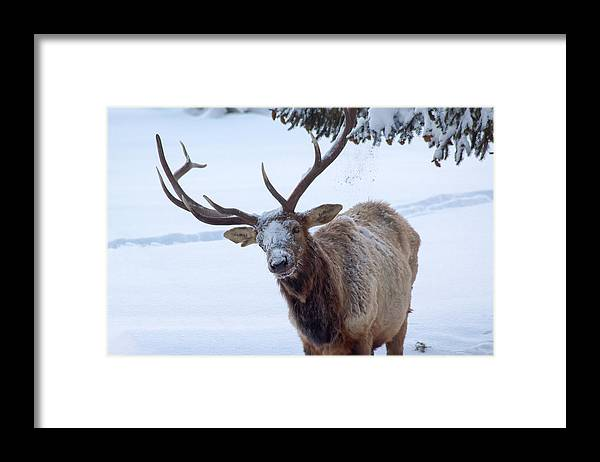 Snow Framed Print featuring the photograph Dumped On by Shane Bechler