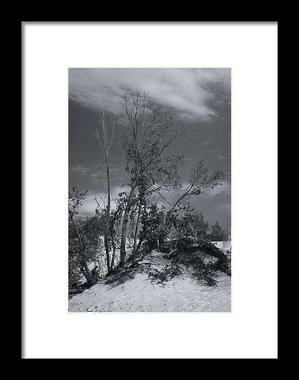 Landscape Framed Print featuring the photograph Dunes Tree Bw by Tim Brandt