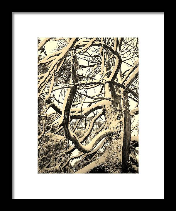 Snow Covered Framed Print featuring the photograph Snow Dusted Limbs by Richard Brookes