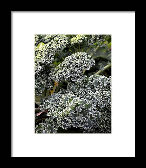 Dwarf Kale Framed Print featuring the photograph Dwarf Kale by Maria Urso