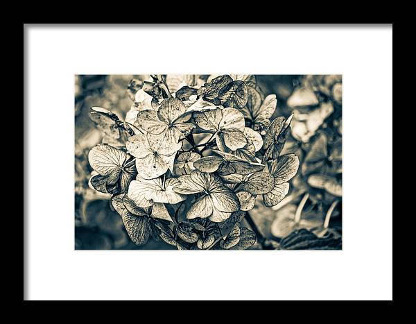 Autumn Framed Print featuring the photograph Dying Beauty Black And White by Ronda Broatch